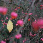 Winterfarben © Lars Baus 2015