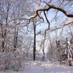 Wintertraum © Lars Baus 2014