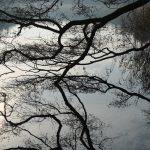 Zweige spiegeln sich im See © Lars Baus 2016